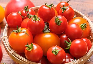 ユーカリファームのトマトドレッシング